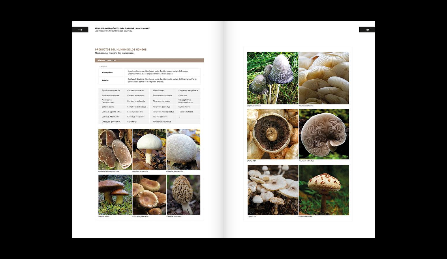 Diseño del libro de cocina Nikkei para Bullipedia - Ferran Adrià, elBullifoundation