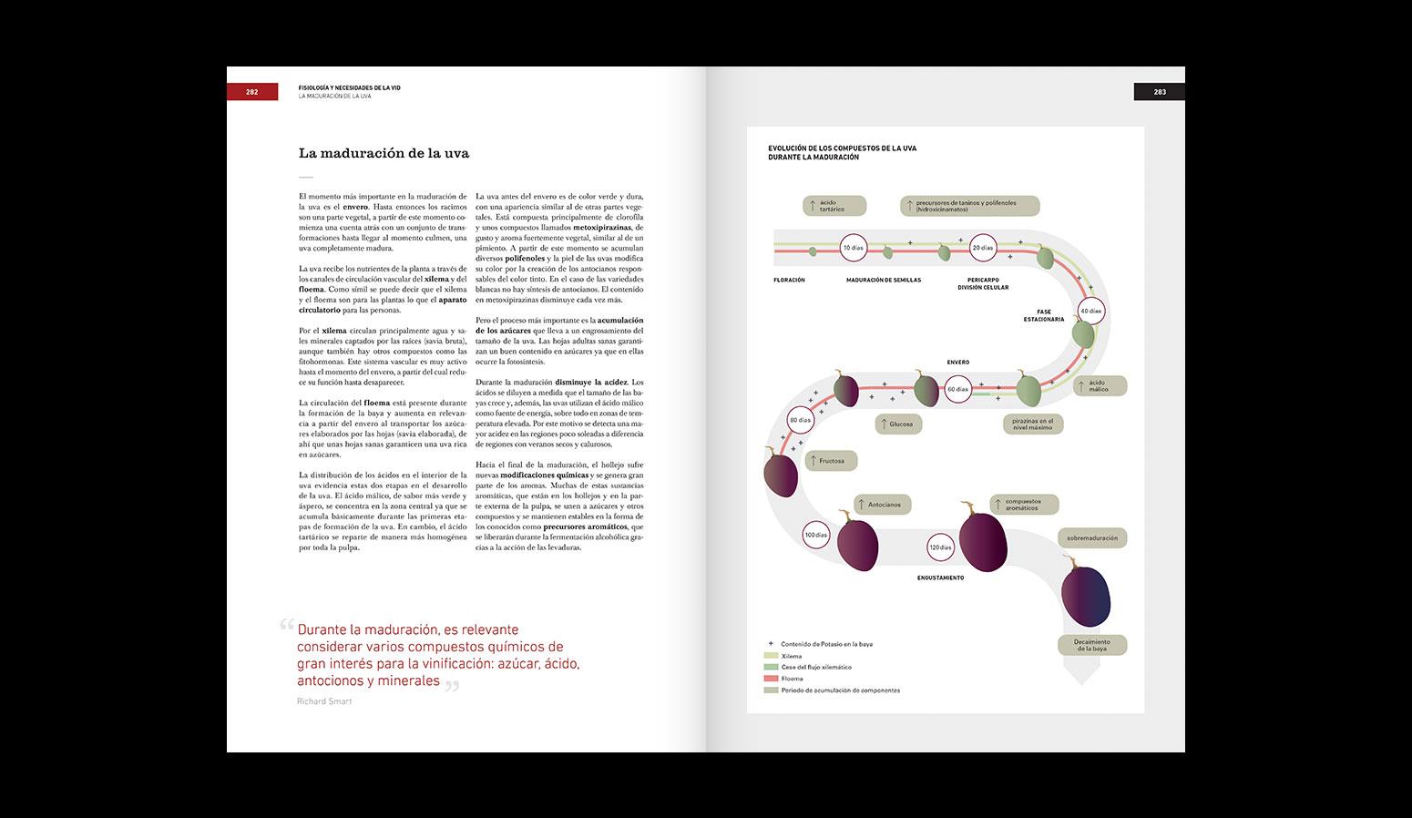 Diseño del libro de Vinos para Bullipedia - Ferran Adrià, elBullifoundation